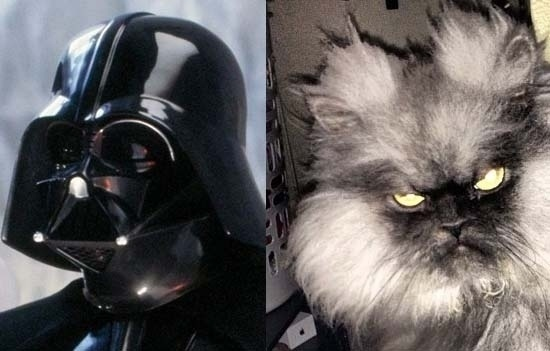 This kitty has joined the dark side.