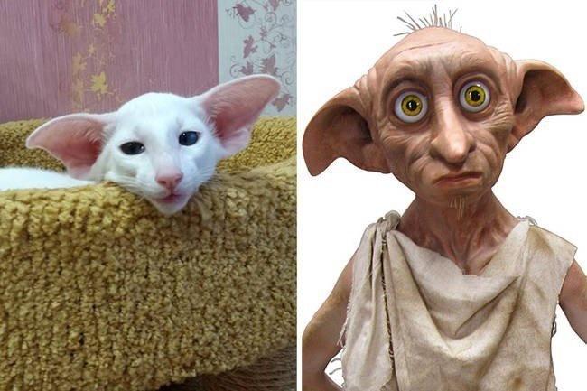 Dobby Cat is uncanny.