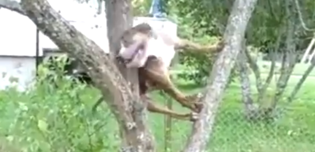 Image result for dog climbs tree to get ball