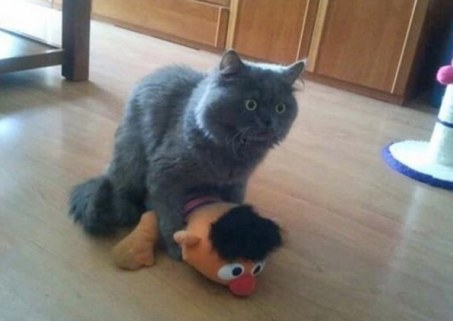 09-surprised-animals