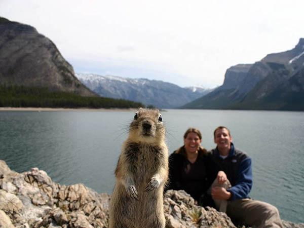 1. Squirrel Photobomb.jpg
