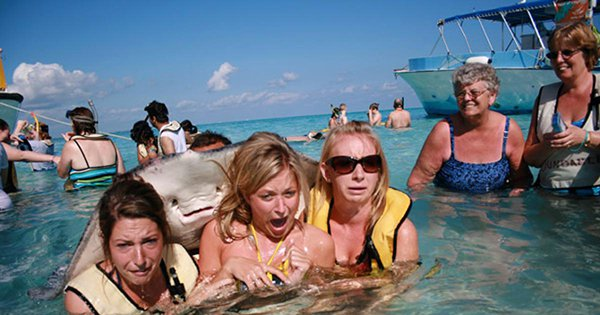 16. The Stingray Steals The Show.jpg