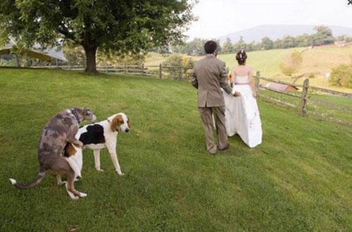 funny wtf wedding photo hump photobomb