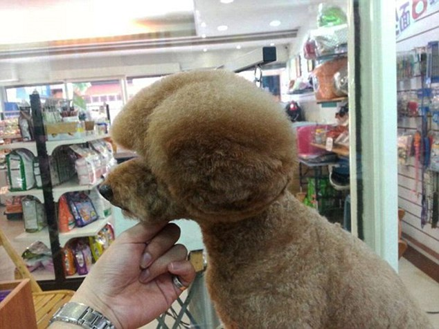 Fetching ear muffs: Many are now opting for the cuts simply to get more likes and shares on social media sites