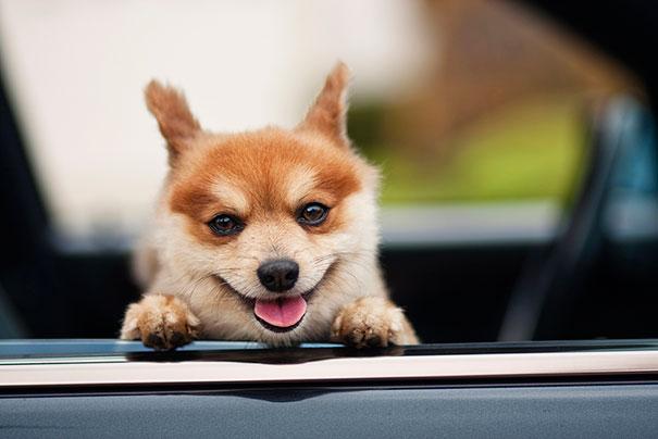 cute-animals-smiling-013