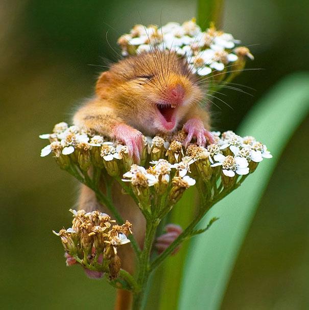 cute-animals-smiling-022