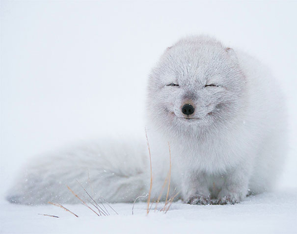 cute-animals-smiling-028