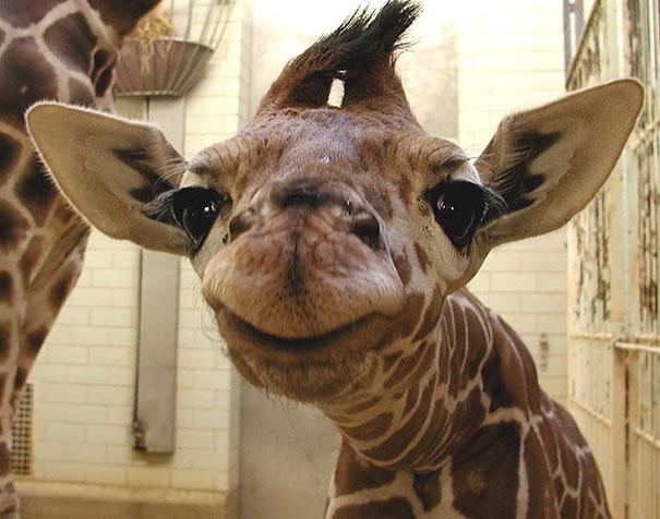 cute-animals-smiling-03