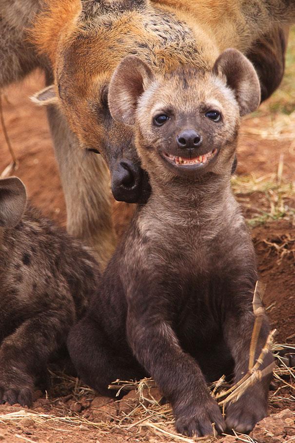 cute-animals-smiling-030