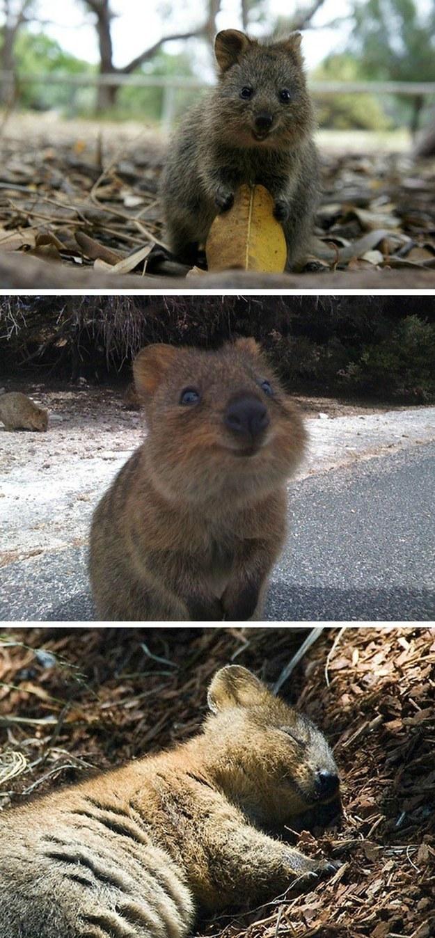 cute-animals-smiling-033