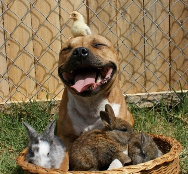 cute-animals-smiling-035