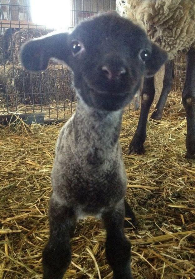 cute-animals-smiling-036