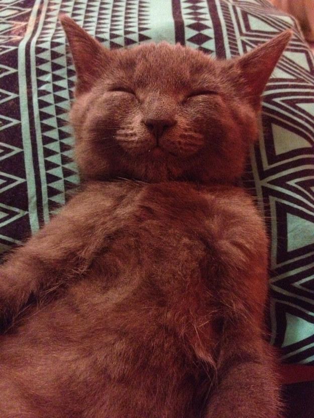 cute-animals-smiling-038