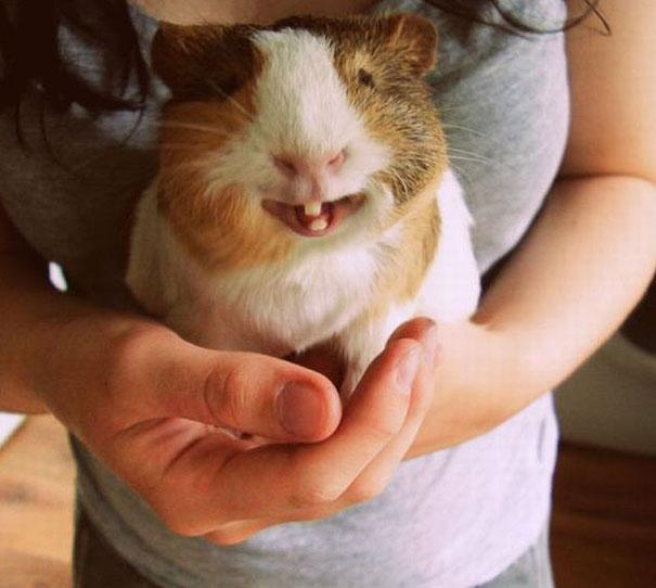 cute-animals-smiling-04