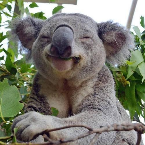 cute-animals-smiling-041