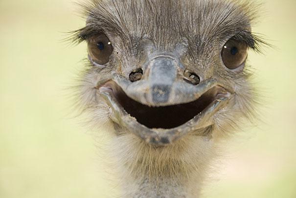 cute-animals-smiling-06