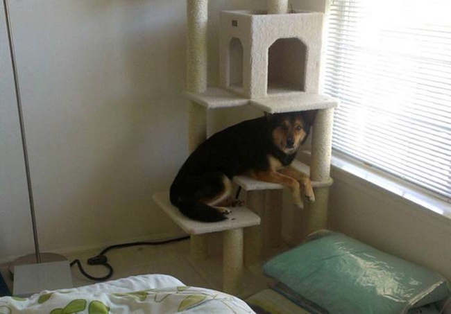 dogs-who-think-they-are-cats-13