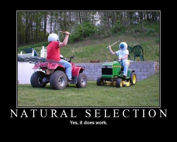 natural-selection-pictures