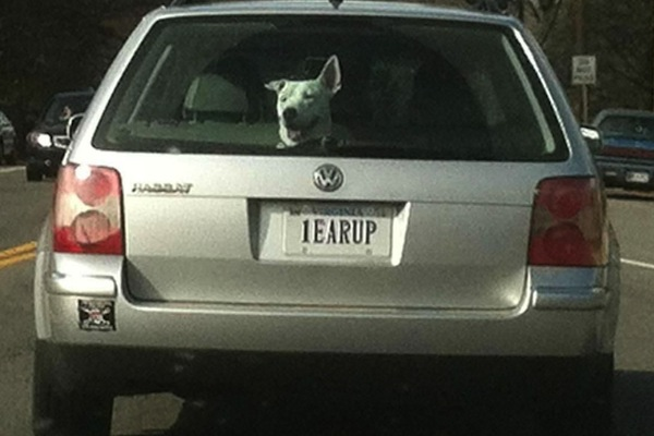 ironic license plates, funny license plates, 1earup