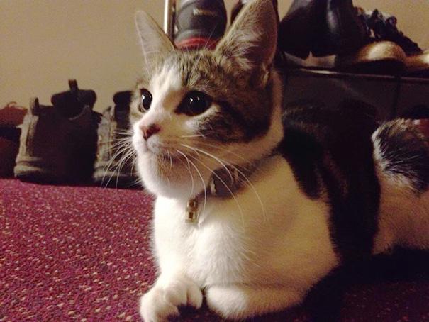 A Friend's Cat Got Stung On The Chin