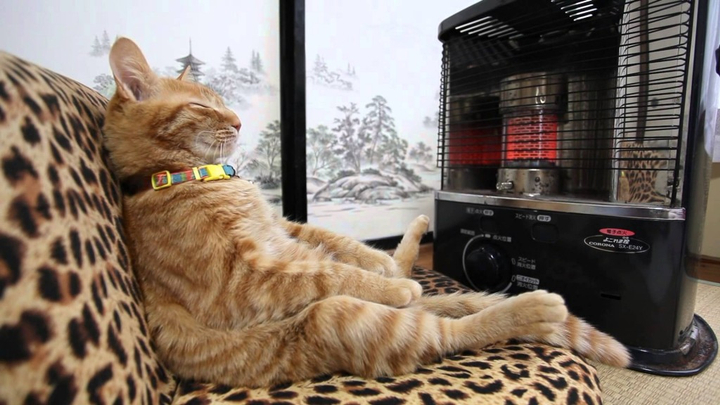 cat by heater
