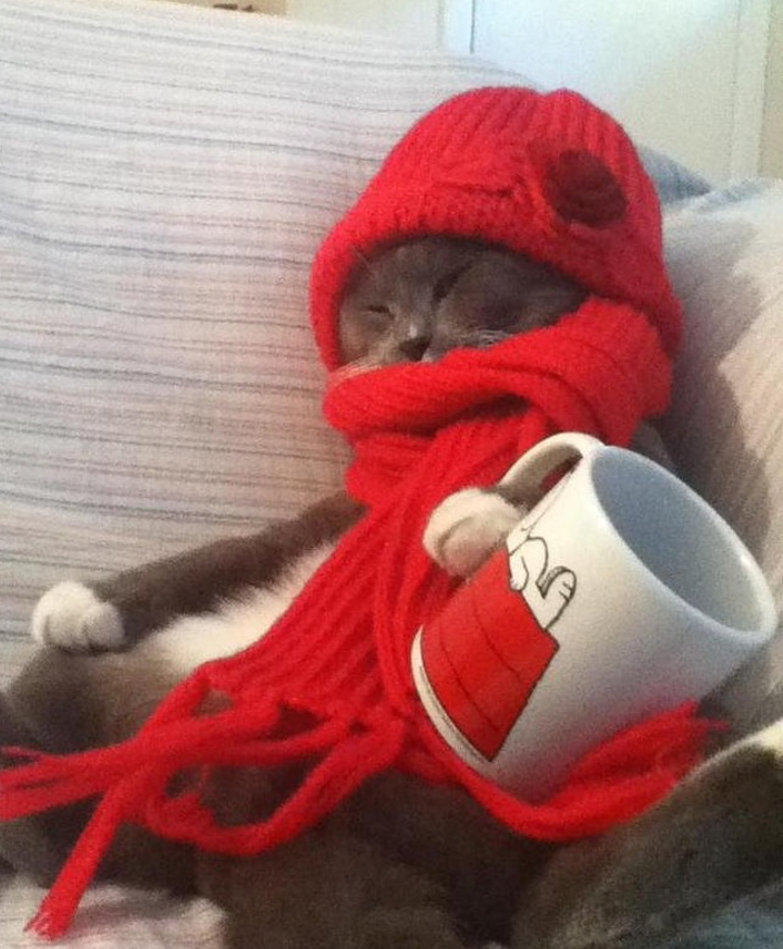 cat with tea