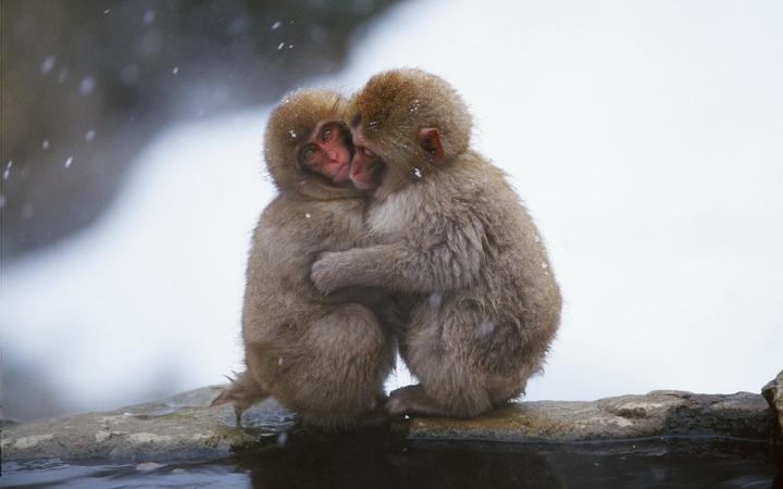 cold monkeys