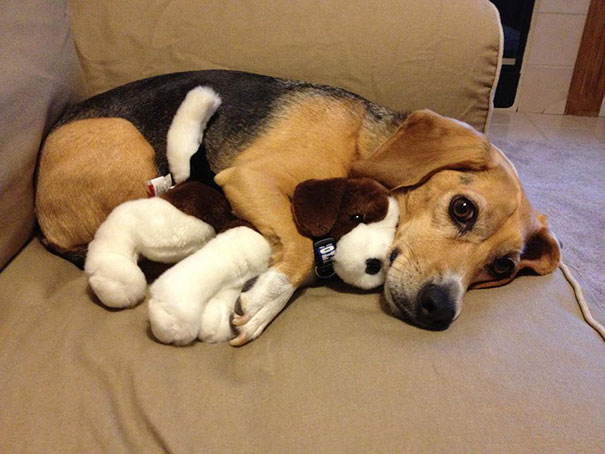 cute-animals-sleeping-stuffed-toys-15