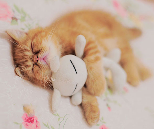 cute-animals-sleeping-stuffed-toys-4