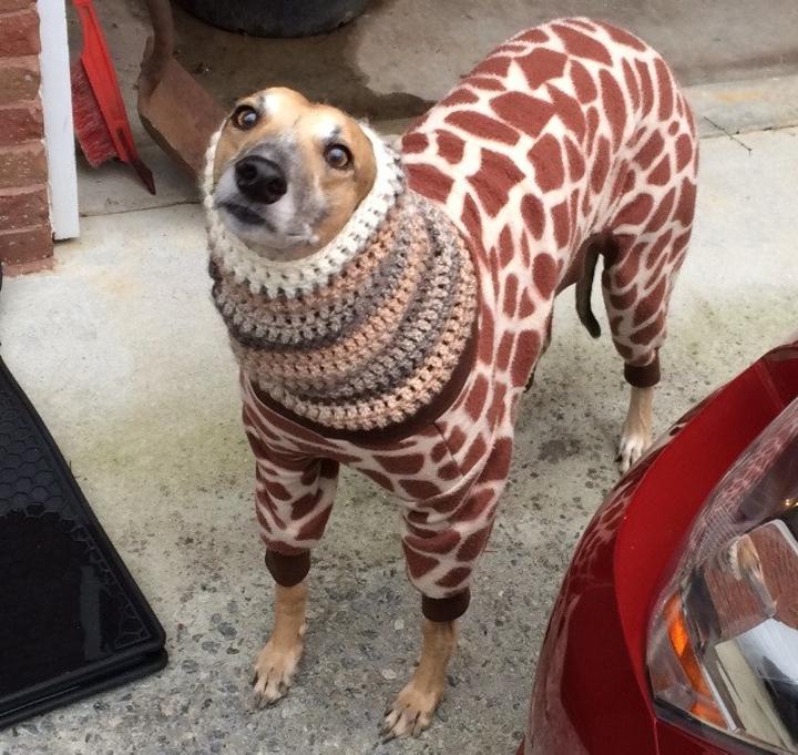 giraffe sweater dog