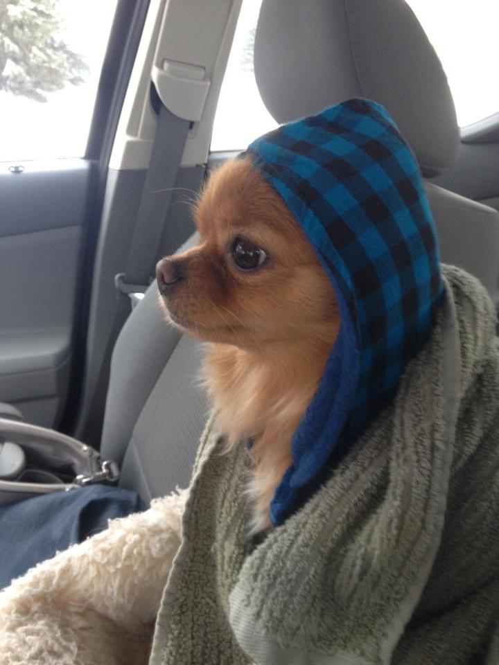 hood scarf dog