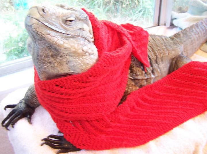lizard scarf