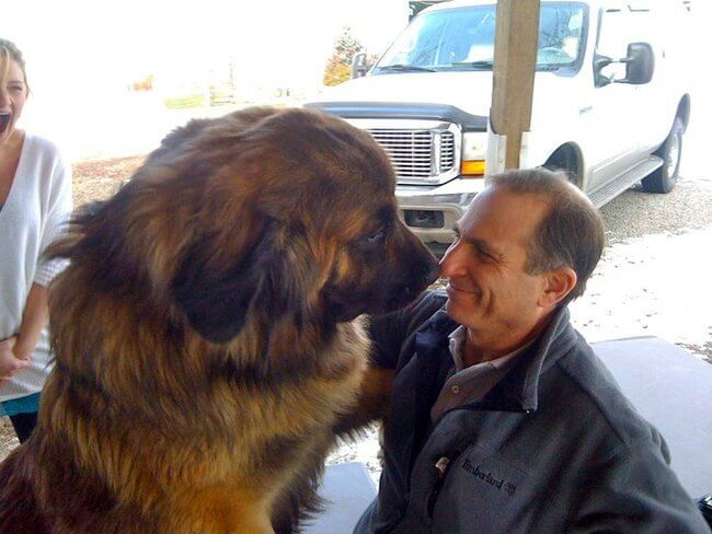 huge dogs of the world 19