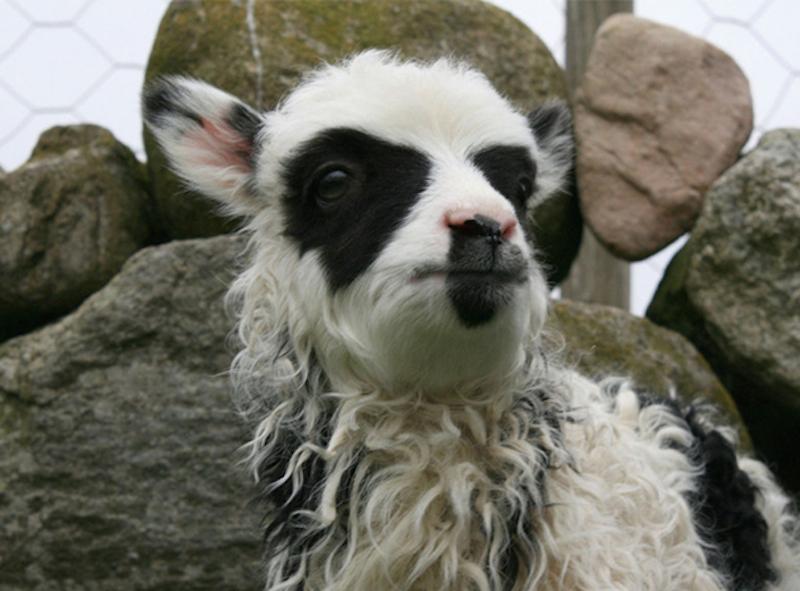 unusual-animal-markings-46