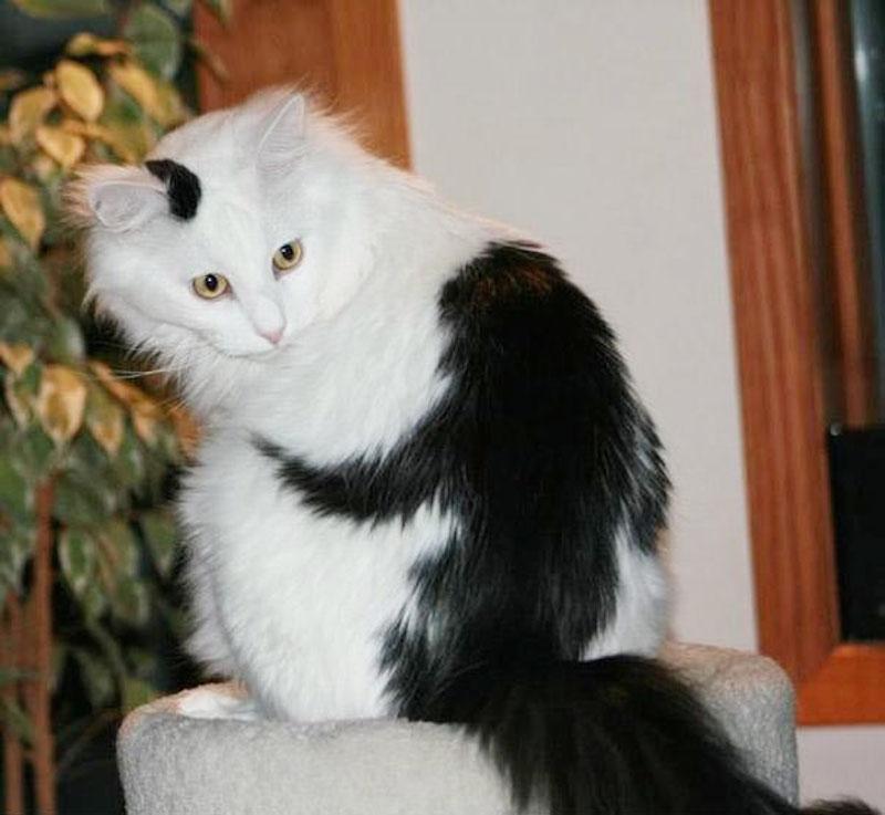 unusual-animal-markings-5