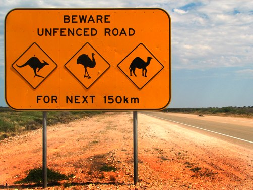 funniest animal warning signs