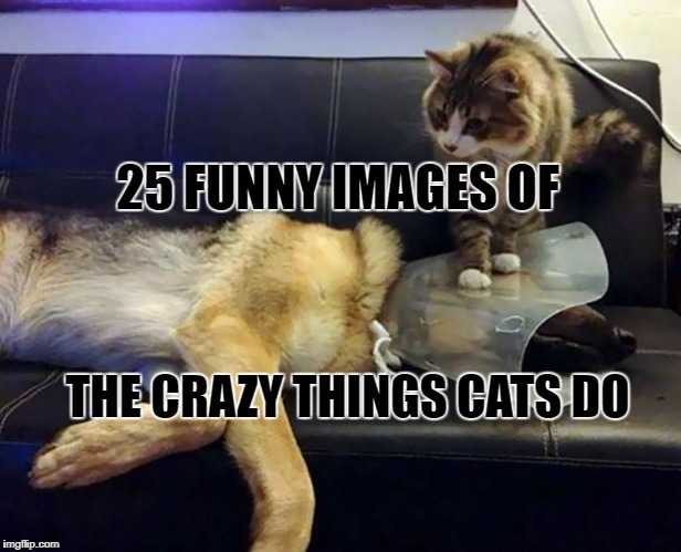 crazy things cats do