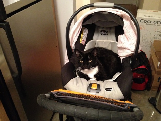 Baby buggies were obviously made for cats to sit in.