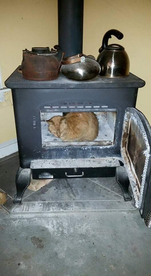 Still-warm fireplaces are cat-chairs also.