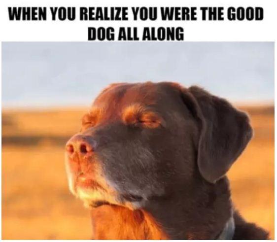 Dog Woman Food Meme