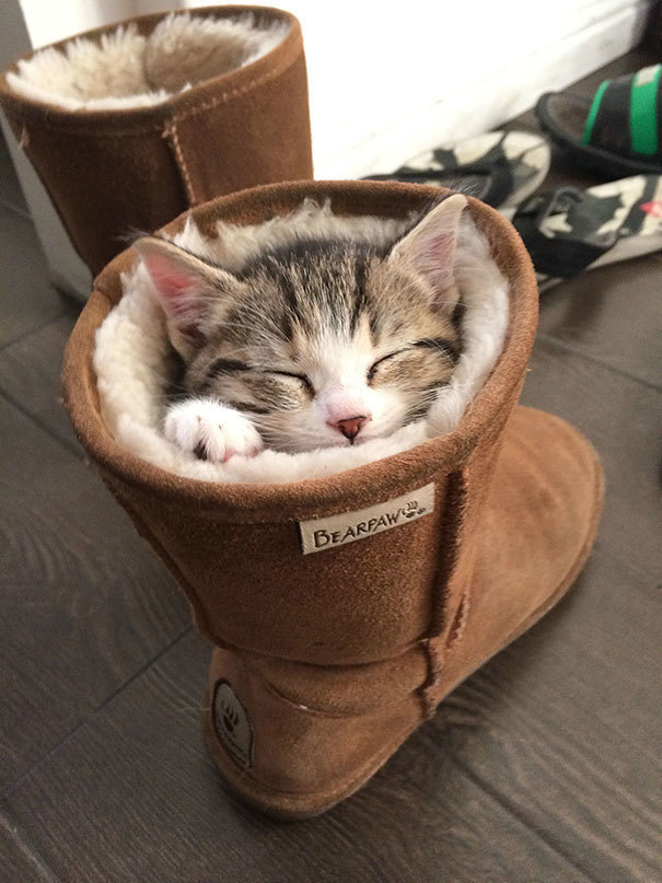 Finally, a use for Ugg boots besides wearing them on your feet.